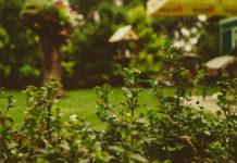 Kret w ogrodzie. Co zrobić, aby pozbyć się problemu?