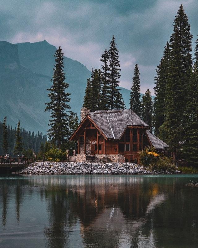 domy w drzewach
