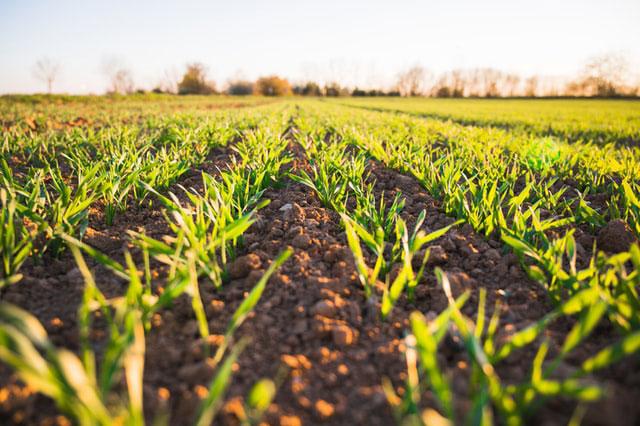 Choroby od grzybów i pleśnienie jest zagrożeniem dla roślin